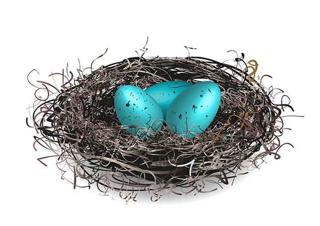 vector robins eggs